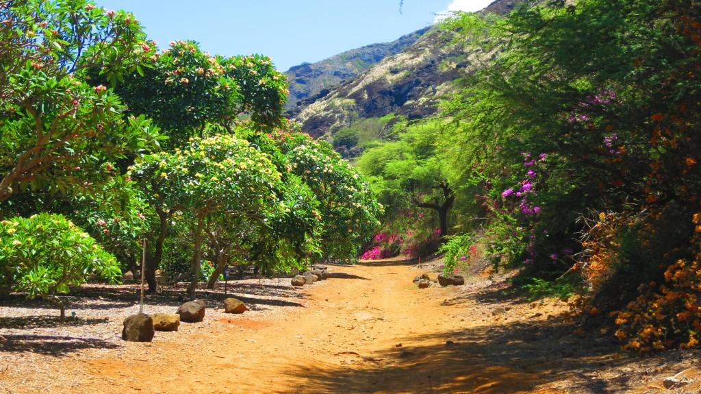 Koko Crater Botanical Garden Oahu Kmb Travel Blog