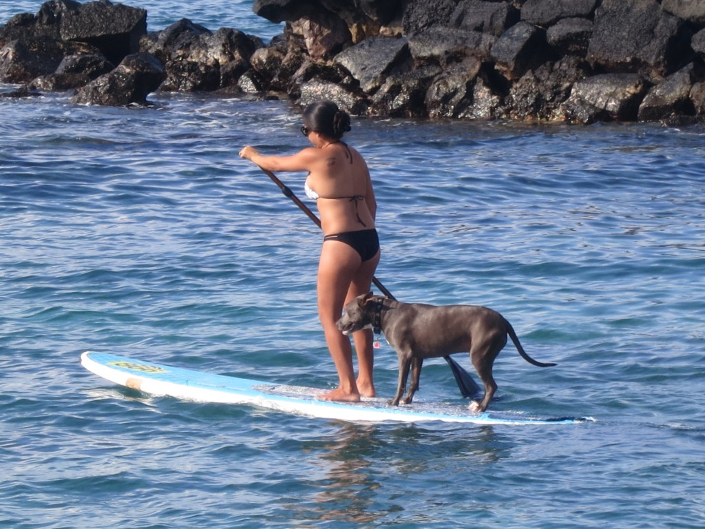 2015 Hawaii S100 1877 | Paddle Bording is also popular in Hawaii.